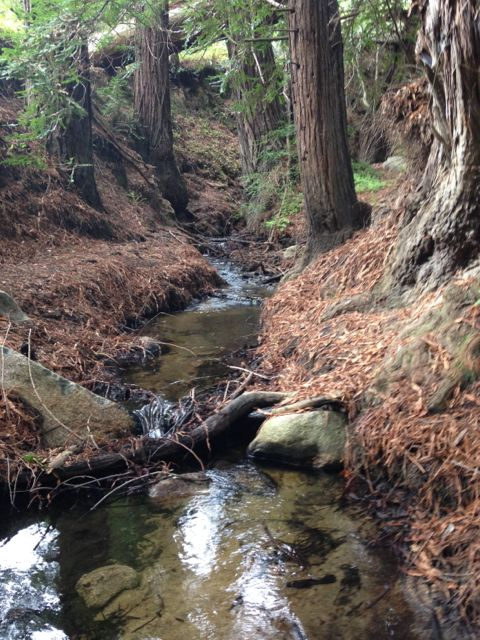 Soberanes Creek